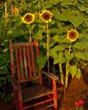 Sonnenblumen und der rote Stuhl Lizenzfreie Stockbilder