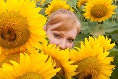Sonnenblumen und Frau 2 Stockfoto