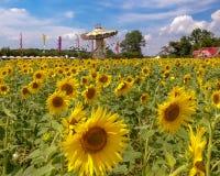 Sonnenblumen und Karussell lizenzfreie stockfotografie