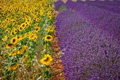 Sonnenblumen und Lavendel, Provence, Frankreich Lizenzfreies Stockbild