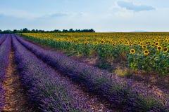 Sonnenblumen und Lavendel, Provence, Frankreich Stockfotografie