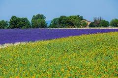 Sonnenblumen und Lavendel, Provence, Frankreich Lizenzfreie Stockbilder