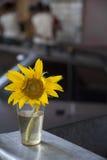 Sonnenblumen- und Plastikglas Stockbild