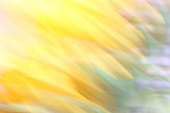 Sonnenblumen-Unschärfe lizenzfreie stockbilder