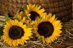 Sonnenblumen vor altem Bienenstock stockfotos