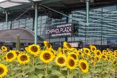 Sonnenblumen vor einem Einkaufszentrum am ai Stockbild