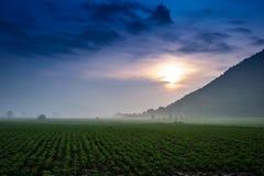 Sonnenblumenbauernhof Lizenzfreie Stockfotografie