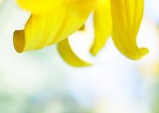 Sonnenblumenblumenblätter Stockfotografie