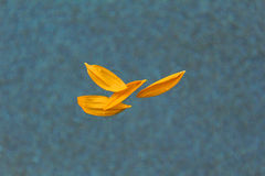 Sonnenblumenblumenblätter Lizenzfreies Stockfoto