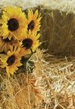 Sonnenblumenblumenstrauß Lizenzfreies Stockfoto