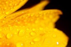 Sonnenblumendetails Stockbilder