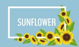 Sonnenblumeneckdekoration mit weißem Rahmen und blauem Hintergrund Stockbilder