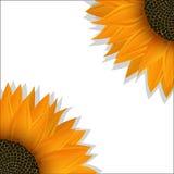Sonnenblumenfahne Stockbilder
