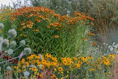 Sonnenblumenfamilienblumen im Garten lizenzfreies stockbild