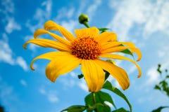 Sonnenblumenfeld. stock abbildung