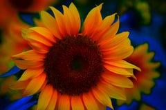 Sonnenblumengesicht 2 Lizenzfreie Stockfotografie