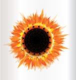 Sonnenblumenherbstsaison Stockbild