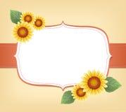 Sonnenblumenhintergrund Lizenzfreies Stockbild