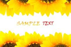 Sonnenblumenhintergrund Stockfotos