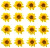 Sonnenblumenhintergrundmuster  Stockfotos