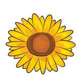 Sonnenblumenkarikatur Lizenzfreie Stockfotos