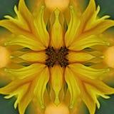 Sonnenblumenmandala, symetric abstrakter Hintergrund Stockbilder