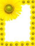 Sonnenblumenrahmen Stockbild