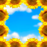 Sonnenblumenrahmen Lizenzfreies Stockfoto