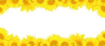 Sonnenblumenrahmen Lizenzfreie Stockfotografie