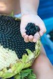 Sonnenblumensamen in den Händen des Mädchens Stockfotografie