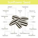 Sonnenblumensamennährstoff von Tatsachen und von Nutzen für die Gesundheit Stockfotografie