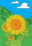 Sonnenblumenvektor Stockbild