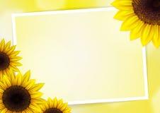 Sonnenblumenvektorhintergrund Stockfoto