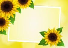 Sonnenblumenvektorhintergrund Lizenzfreies Stockfoto