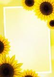 Sonnenblumenvektorhintergrund Lizenzfreie Stockfotos