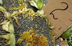 Sonnenblumepreis Lizenzfreies Stockbild