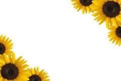 Sonnenblumerand Stockbild