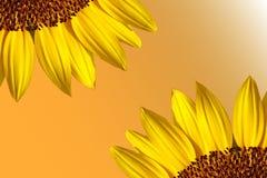 Sonnenblumerand Stockfotografie