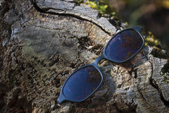 Sonnenbrille auf einem Baumstumpf Stockbilder
