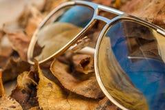 Sonnenbrille auf gefallenem gelbem Herbstlaub Lizenzfreie Stockbilder