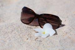 Sonnenbrille auf versandet mit Blume Stockfotografie