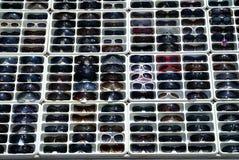 Sonnenbrillen für Verkauf Stockfoto