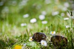 Sonnenbrillen im Gras Stockfotos