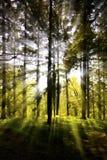 Sonnendurchbruch durch eine Waldfläche Stockbilder