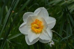 Sonnendurchbruch Wildflower Lizenzfreie Stockfotografie