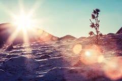 Sonneneruption auf schneebedeckten Steigungen, Karpatenberge Stockfoto