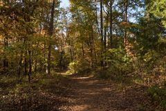 Sonnengesprenkelter Waldweg im Frühherbst lizenzfreie stockbilder