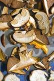 sonnengetrocknete Pilze Stockfoto