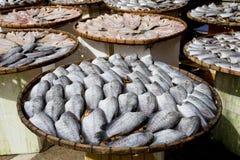 Sonnengetrocknete Schlangen-Haut Gourami-Fische in einem Bambuskorb thailand Lizenzfreie Stockfotografie