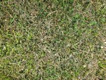 Sonnengetrocknetes Gras Stockbild